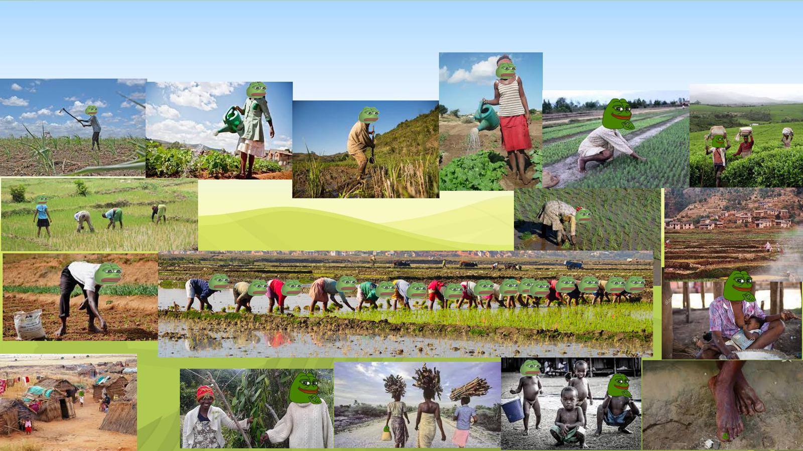 Pepe Farm